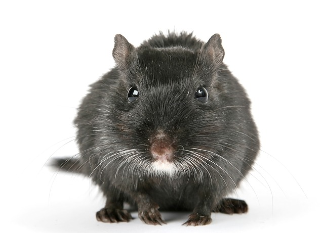 Anvisa proíbe a venda de produtos por excesso de pelos de roedores