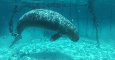 Mergulhadores encontram animais presos em jaulas submersas; vídeo