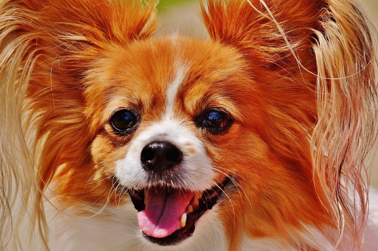 Quais os nomes mais comuns de cães no Brasil? Descubra