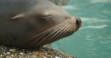 IPeC abre vagas para voluntários interessados em animais selvagens