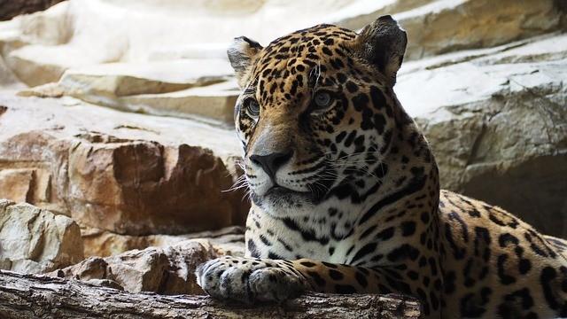 Concurso público do Zoológico de São Paulo; veja como se inscrever