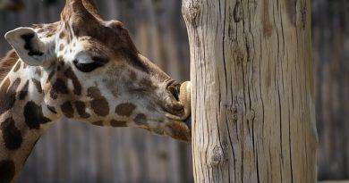 Zoológico de São Paulo abre vagas para o Programa de Aprimoramento Profissional