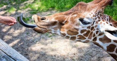 Zoológico de São Paulo abre vagas para Programa de Aprimoramento Profissional