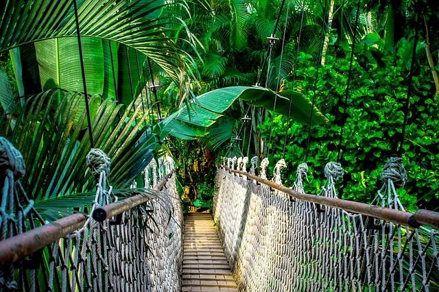 Instituto Mamirauá seleciona orientador de ecoturismo