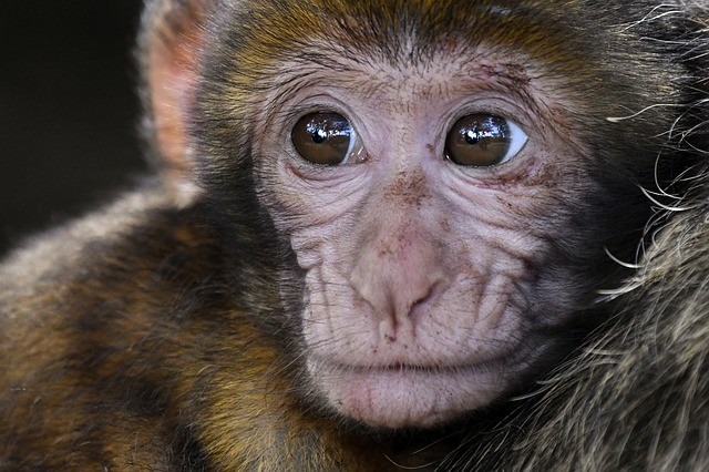 Escola de Veterinária da UFMG realiza encontro de Primatologia