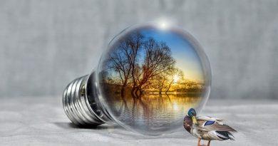 Instituto do Meio Ambiente abre 10 vaga de emprego