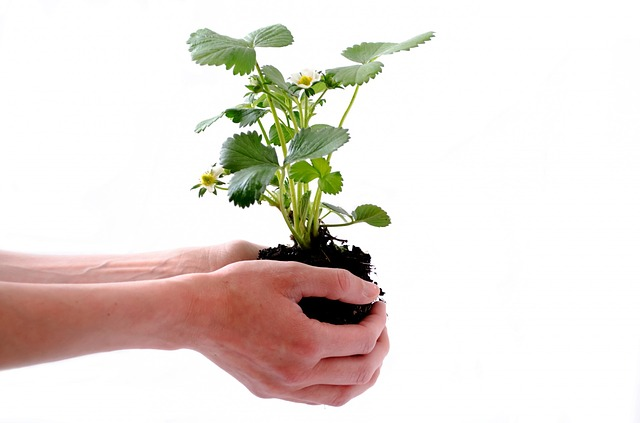Especialização gratuita em Sociedade, Ambiente e Desenvolvimento recebe inscrições