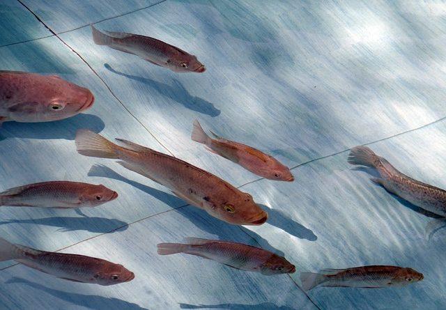 Inpa abre vagas para doutorado em Biologia de Água Doce e Pesca Interior