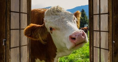 UFV seleciona médicos veterinários e agrônomos