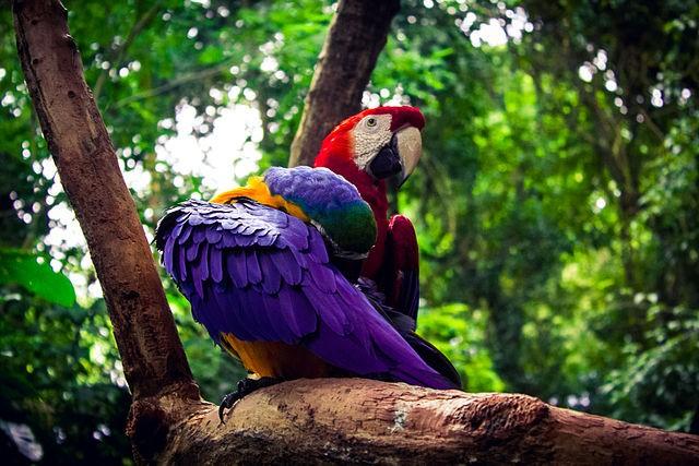 Araras no Parque das Aves