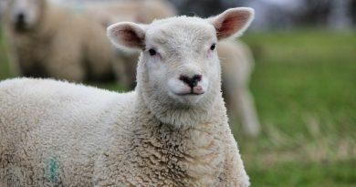 Ouro Fino abre vaga de estágio em medicina veterinária