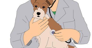 Adecco abre vaga de estágio remunerado para estudante de medicina veterinária