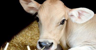 UFMG oferece dez vagas para o mestrado em Produção Animal