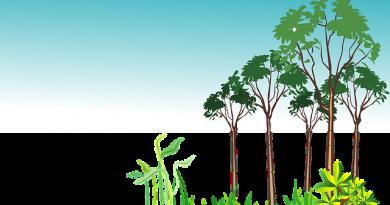 Secretaria do Meio Ambiente abre inscrições para curso gratuito a distância
