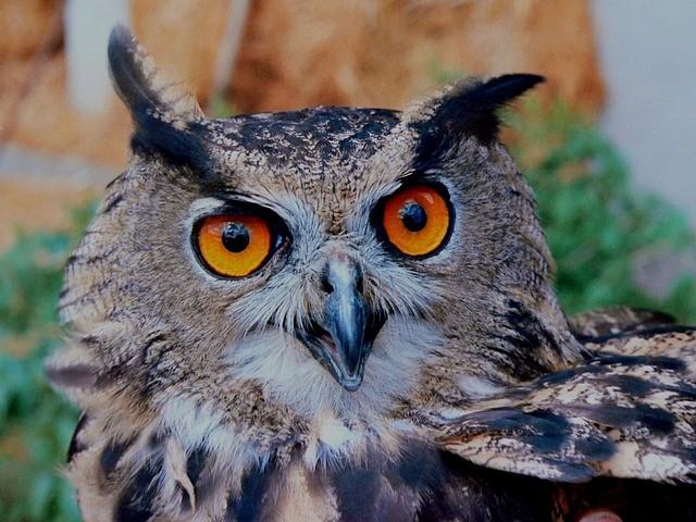 Especialização gratuita em Meio Ambiente e Biodiversidade abre inscrições