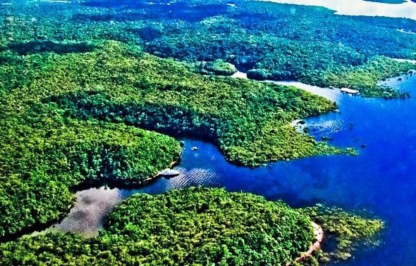 Inpa oferece 30 vagas para professores em curso gratuito de imersão na floresta