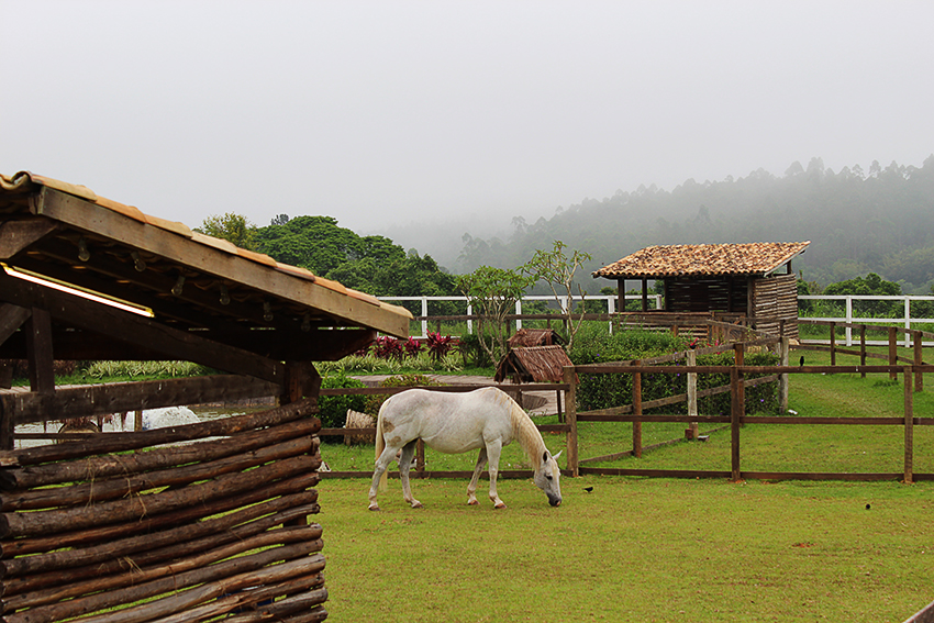 Cavalo Ding de A Fazenda
