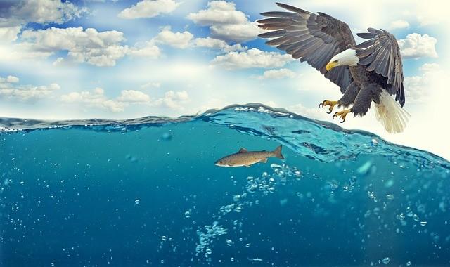 Agência Nacional das Águas oferece cursos gratuitos; inscrições abertas