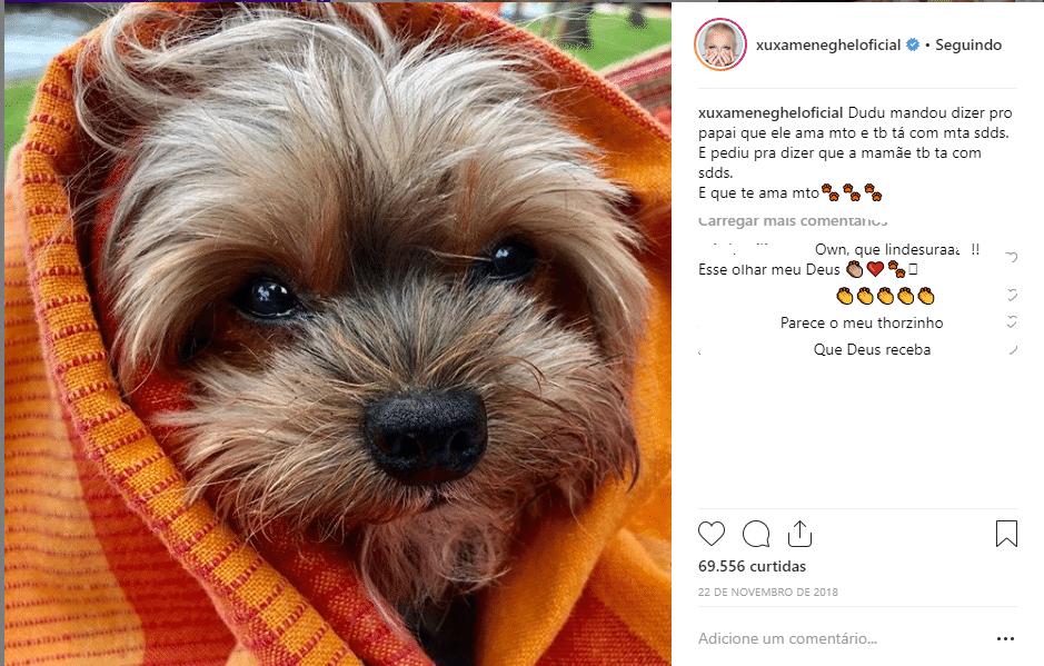 Dudu, o cachorrinho de Xuxa Goto/reprodução Instagram)