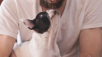 Votorantim- SP seleciona veterinário, assistente social, entre outros