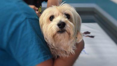 Prefeitura do Rio de Janeiro abre 35 vagas para médicos veterinários