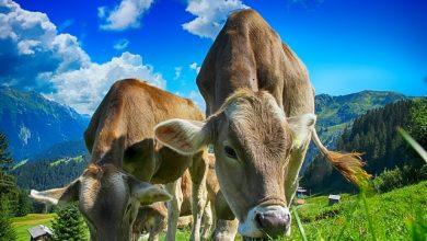 Inscrições abertas para curso gratuito online sobre Avaliação da gestão na propriedade rural