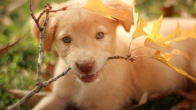 Presente bom para cachorro? O que dar de presente para o pet