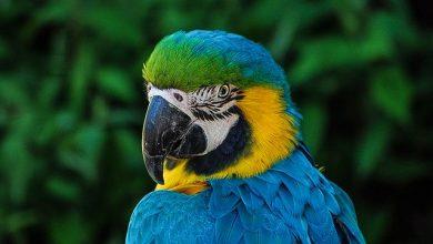 Zoológico de SP e UFSCar abrem inscrições para mestrado profissional gratuito