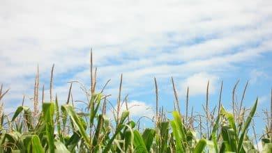 Vagas em Residência em Práticas Agrícolas e Assistência Técnica e Extensão Rural