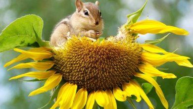 Especialização gratuita em Biodiversidade recebe inscrições