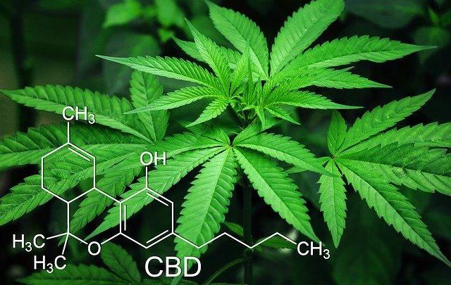 Unifesp dará certificado em curso online gratuito de Cannabis medicinal