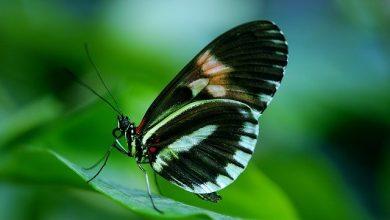 Especialização gratuita 2020 na área Ambiental recebe inscrições