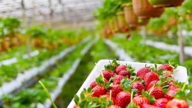 Pós-graduação gratuita 2020 sobre produção orgânica recebe inscrições