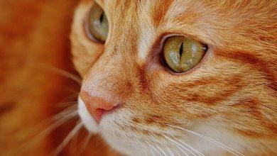 Zoetis seleciona veterinários, agrônomos, vacinadores, entre outros